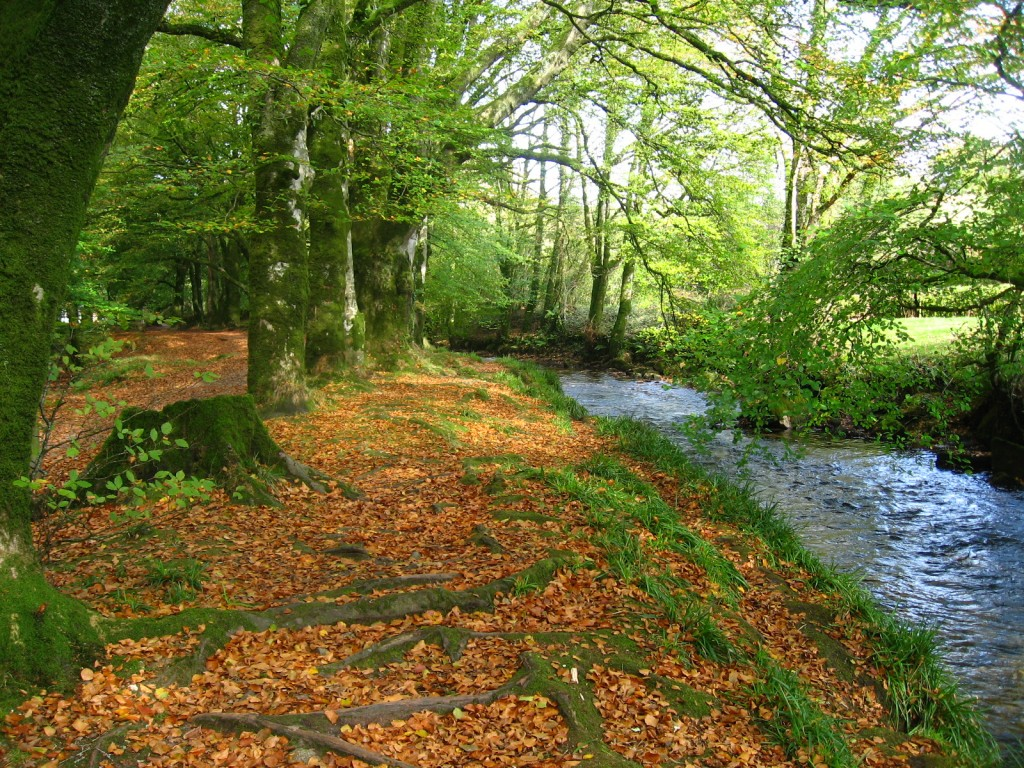 holiday cottages bodmin moor cornwall self catering